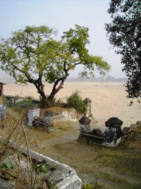 Baum am Naranjana-Flussbett in Bodhgaya © Doris Wolter