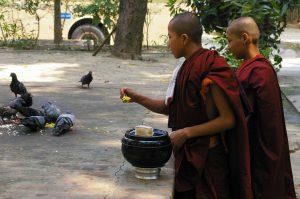 Die Reste für die Tauben! Essensspenden am Mönchskloster, Myanmar (Burma) © Gerhard Weil